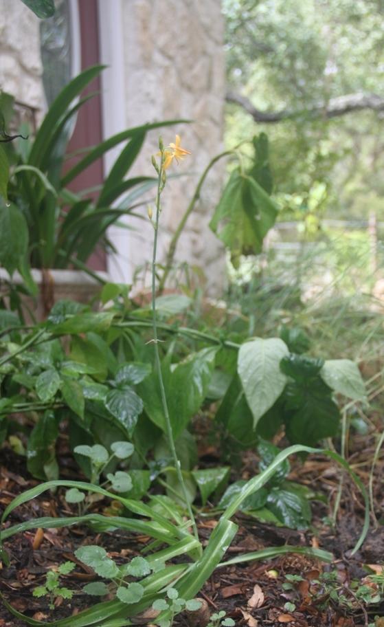 Rock-Oak-Deer: Texas Native Plant Week 2015