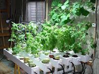 Inilah Solusi Mencegah Serangan Hama Pada Indoor Garden