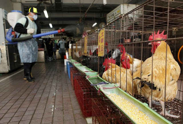 Εντόπισε εστία της γρίπης των πτηνών στη Βουλγαρία