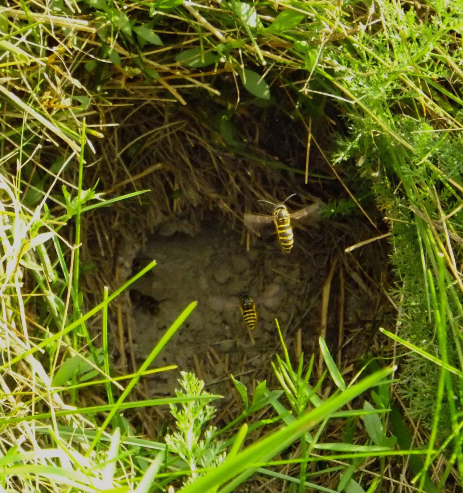 Hornet Nest Ground