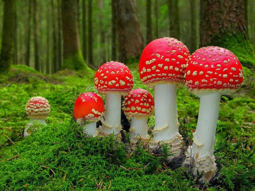 Estudo de  6 anos revela que os cogumelos mágicos podem ajudar a parar de fumar tabaco.