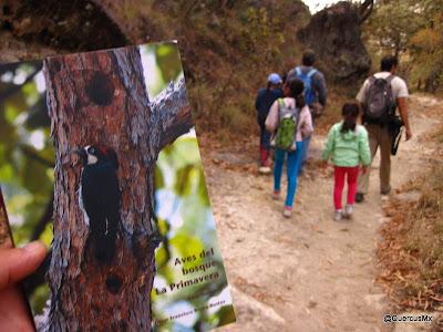 Libro de bolsillo Aves del bosque La Primavera