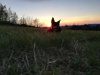 zachód słońca i pies