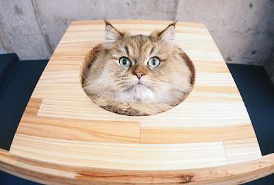 猫_神話_ケット・シー3
