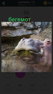 морда бегемота на 14 уровне в игре 470 слов