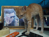 5 Kelebihan Kucing Kampung Dibandingkan Kucing Ras