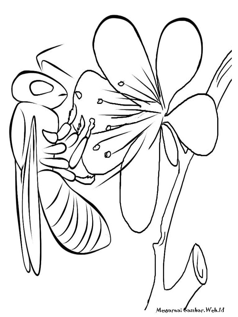 Gambar Sketsa Bunga Dan Lebah