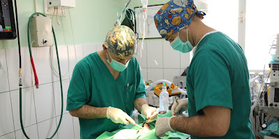 Hirurško uklanjanje mast cell tumora kod psa