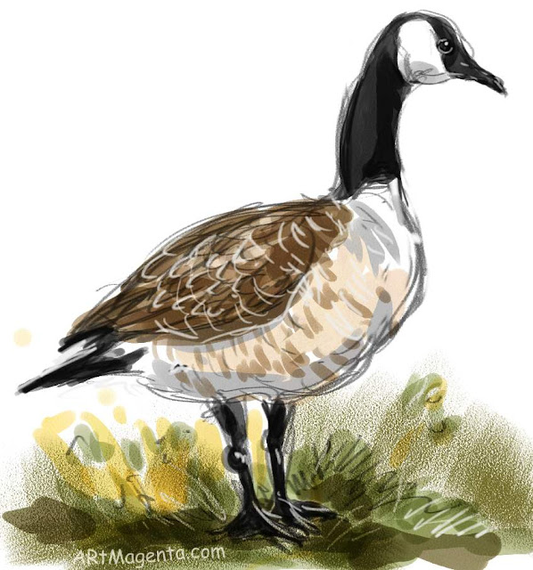 Canada Goose sketch painting. Bird art drawing by illustrator Artmagenta