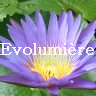 http://www.evolumiere.com/p/blog-page_1.html