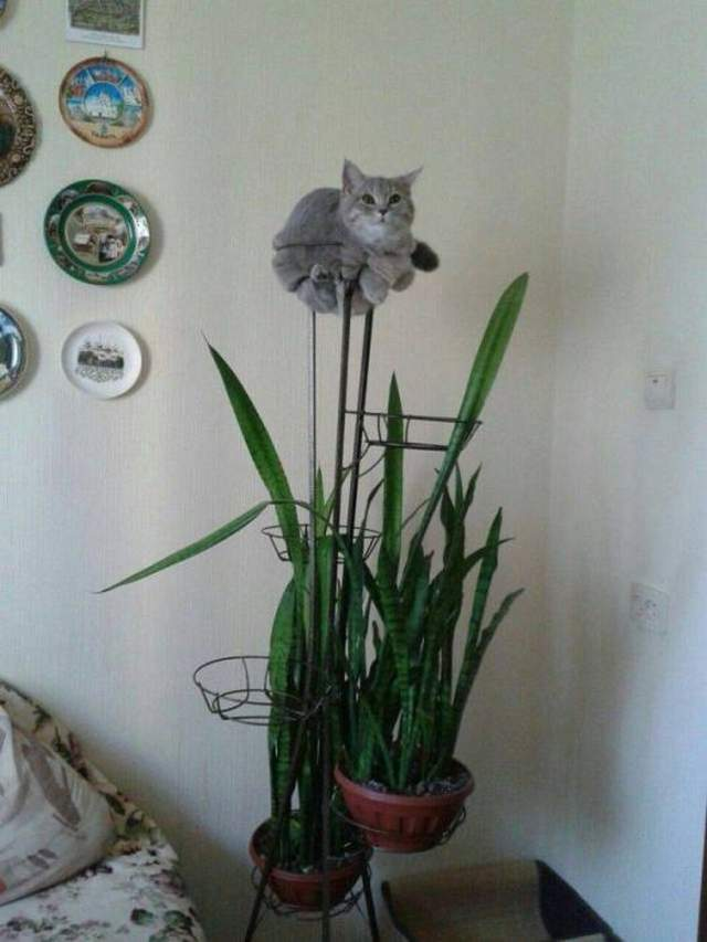 Funny cats - part 278, best funny cats, adorable cat images