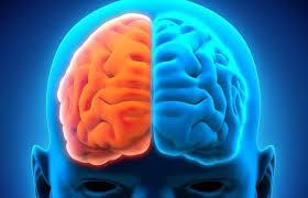 Diferencias cerebro lados
