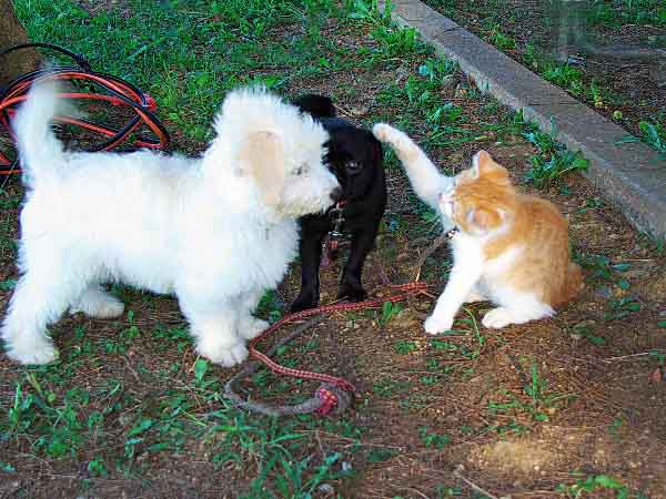 cat,dogs,Wordless-Wednesday, Okinawa
