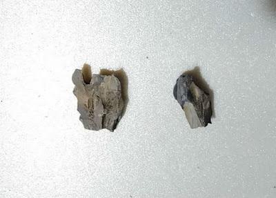今回使用した木化石