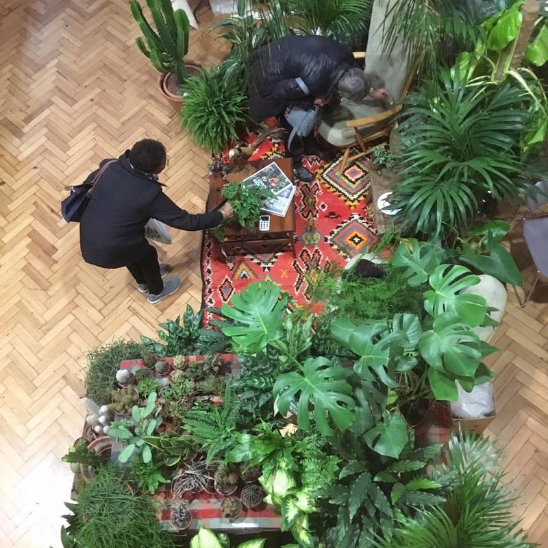 Salón con alfombra y plantas de interior