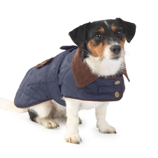 Blue Quilted dog coat at Mutleys of Ashby de la Zouch