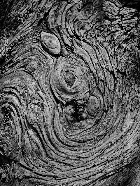 Ağaç mobil duvar kağıdı
