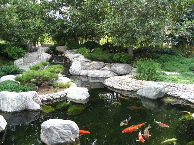 Tips dan Trik Membangun Kolam Ikan Koi dan Cara Membersihkannya