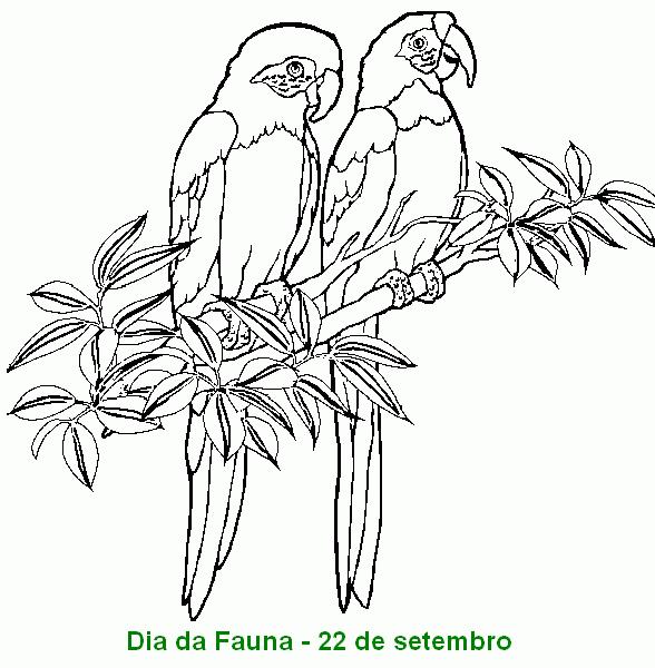 Dia Da Fauna Desenhos E Atividades Para Colorir Imprimir Ix