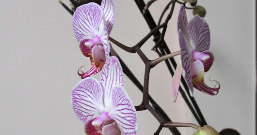 Death, Life, and Orchids