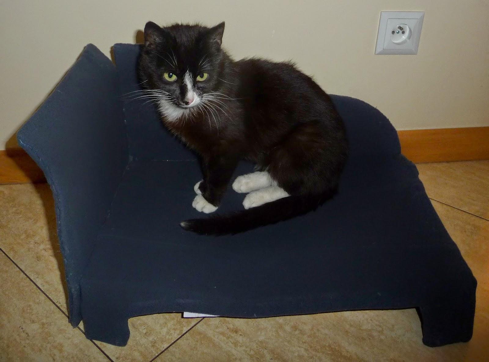 jak zrobić łóżko dla kota