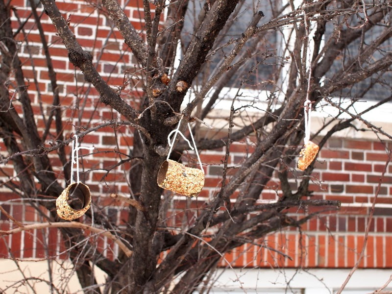 toilet paper roll bird feeders hung on tree