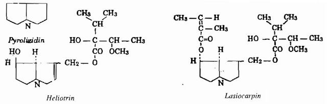 Thành phần hóa học Cây Vòi Voi - Heliotropium indicum - Nguyên liệu làm thuốc Chữa Thê Thấp và Đau Nhức