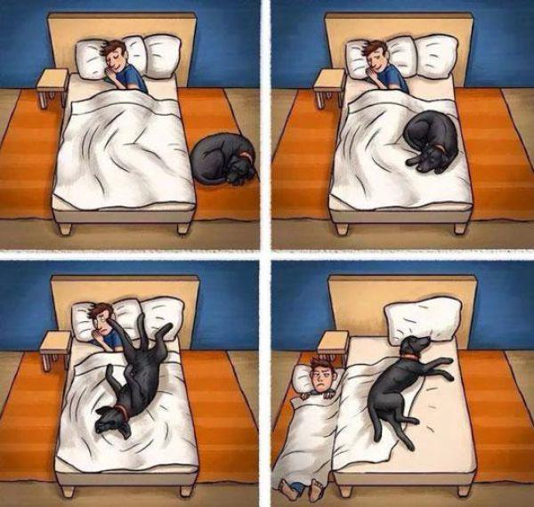 17 Hilarious Problems Dog Owners Will Relate To - When your dog takes over your bed, again.