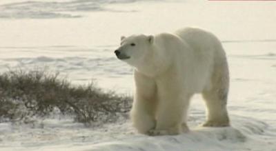 العلماء يحذرون من الزيادة الحادة في درجة حرارة الأرض.