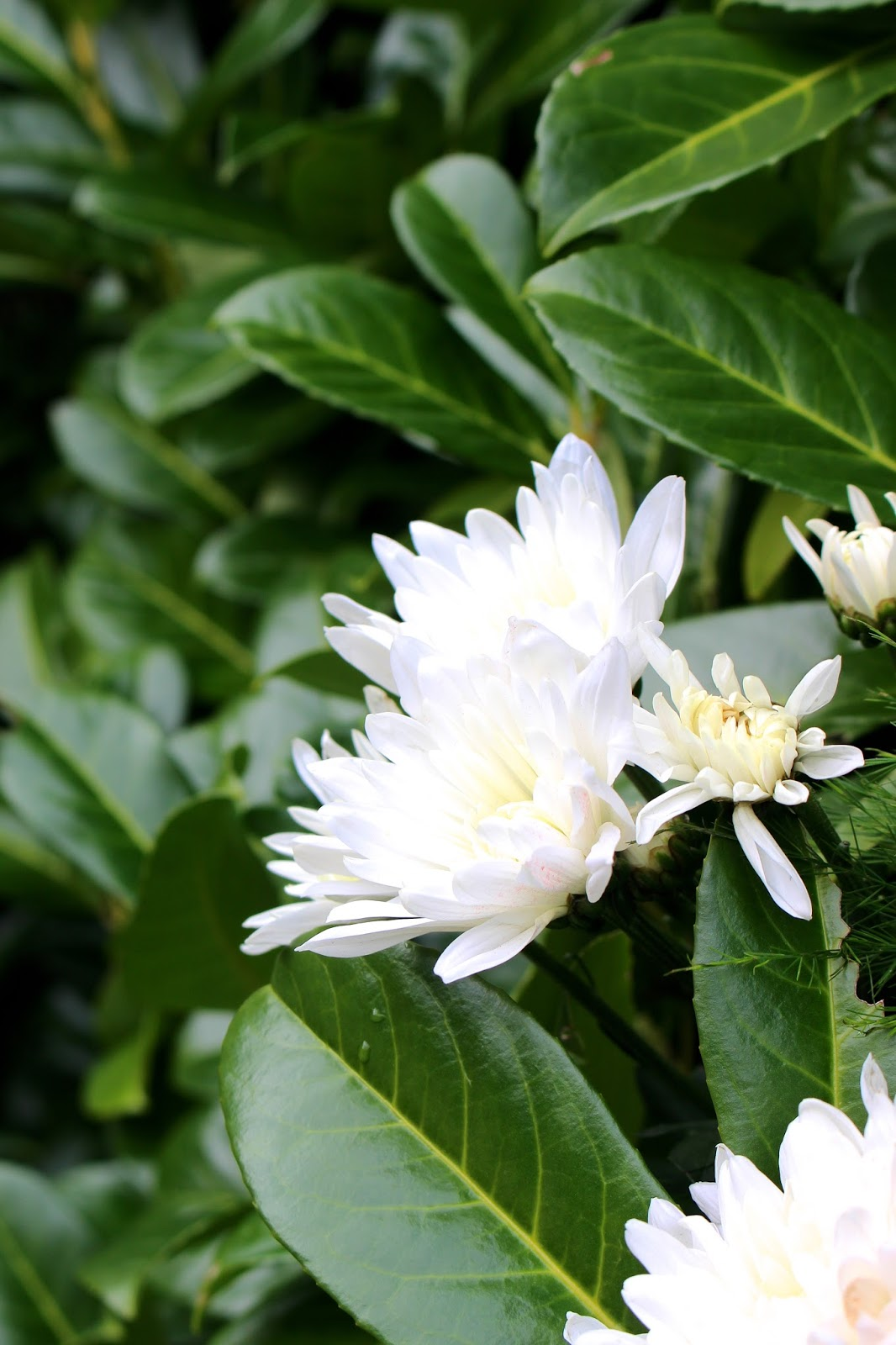 plant photography British blog