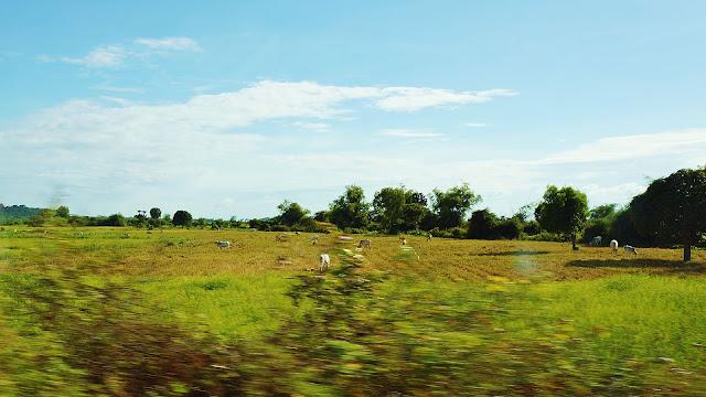 Изорбражение стада пасущихся коров