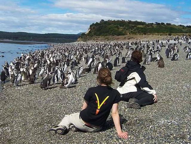 Pinguins e visitantes na Ilha Martillo em Ushuaia, Argentina