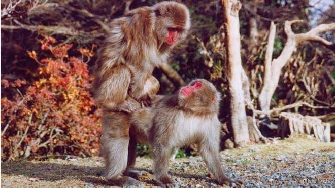 O mistério da homossexualidade em animais