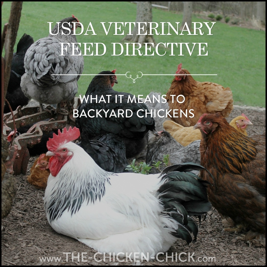 the chicken antibiotics use rules change what the usda