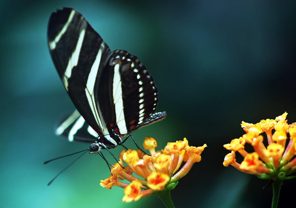 Butterflies Wallpapers Hd Download: WALLPAPERS WORLD: Free Wallpaper Downloads