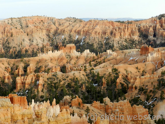 Warm orange colors of the hoodoos