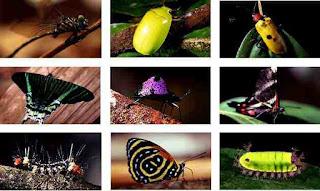 Visión de los insectos