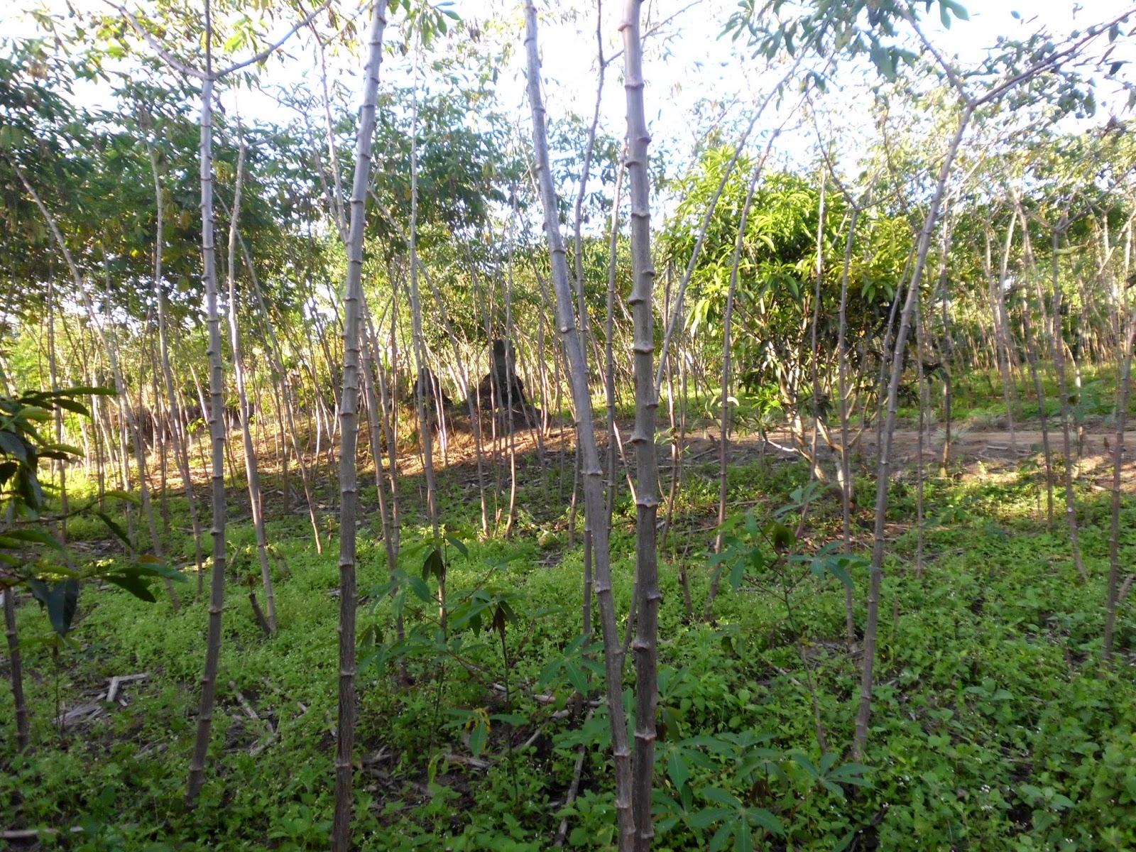 Selamat Datang DI Desa Sigotom Nauli