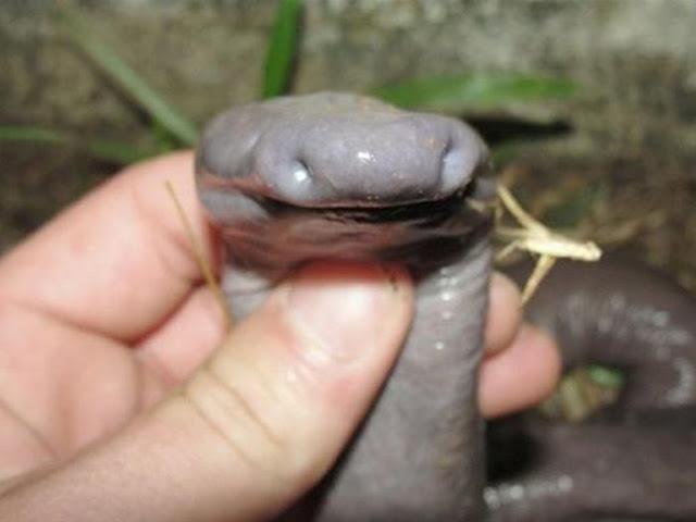 snake_04.jpg