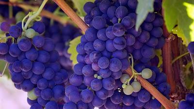 Purple Grapes Fruit