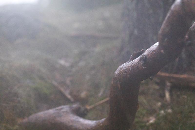 metsä, wood, nature, luonto, luontovalokuvaus, naturephotography, forest, finland, suomi, Visualaddict, valokuvaaja, Frida Steiner,