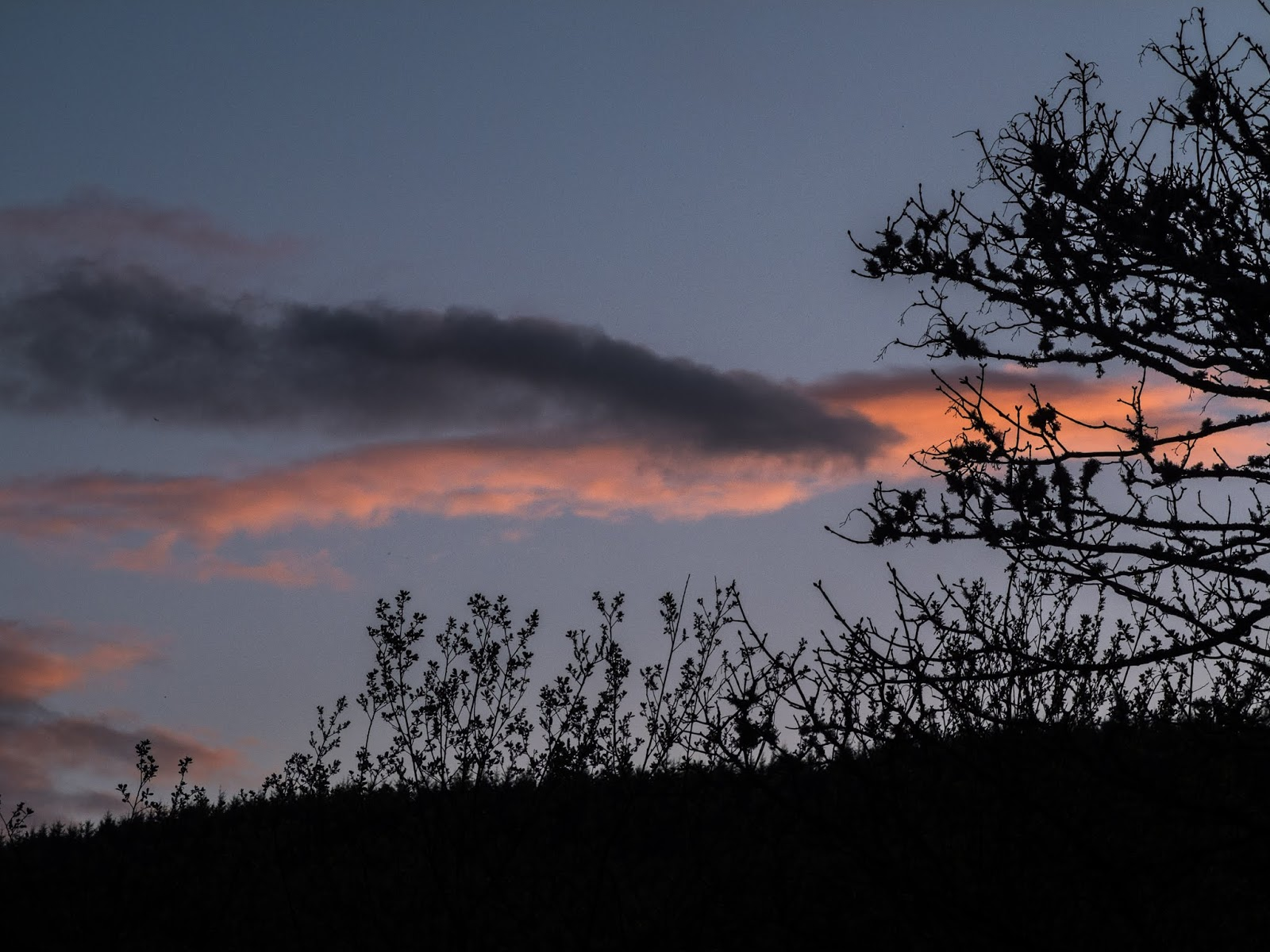 Two clouds blue and red at sunset over a hill with silhouette branches.