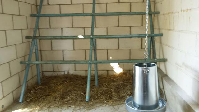 Posaderos y tolva para grano en gallinero