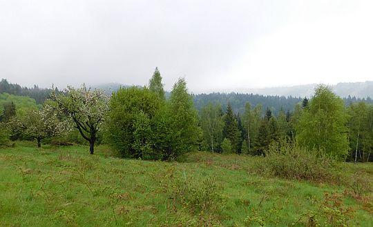 Polana Przysnopek.