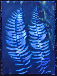Wet cyanotype, Sue Reno, Image 8
