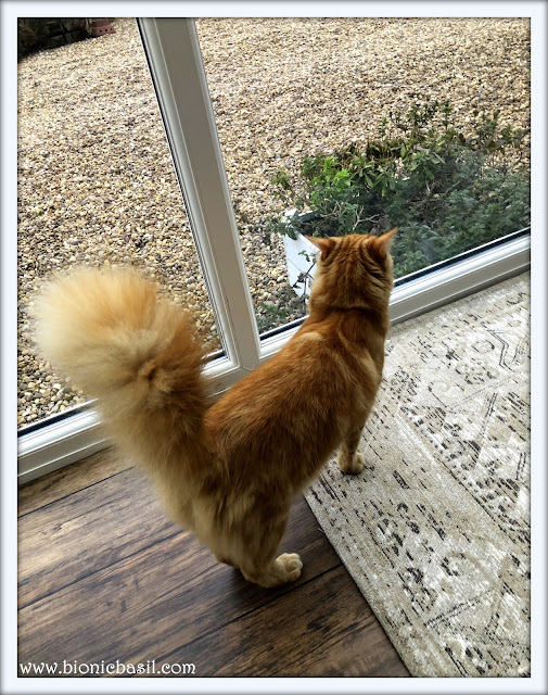 Fudge's Magnificently Epic Floof Selfie on The Sunday Selfies Blog Hop@BionicBasil®