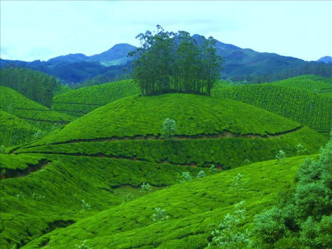 Devikulam Hills, Kerala