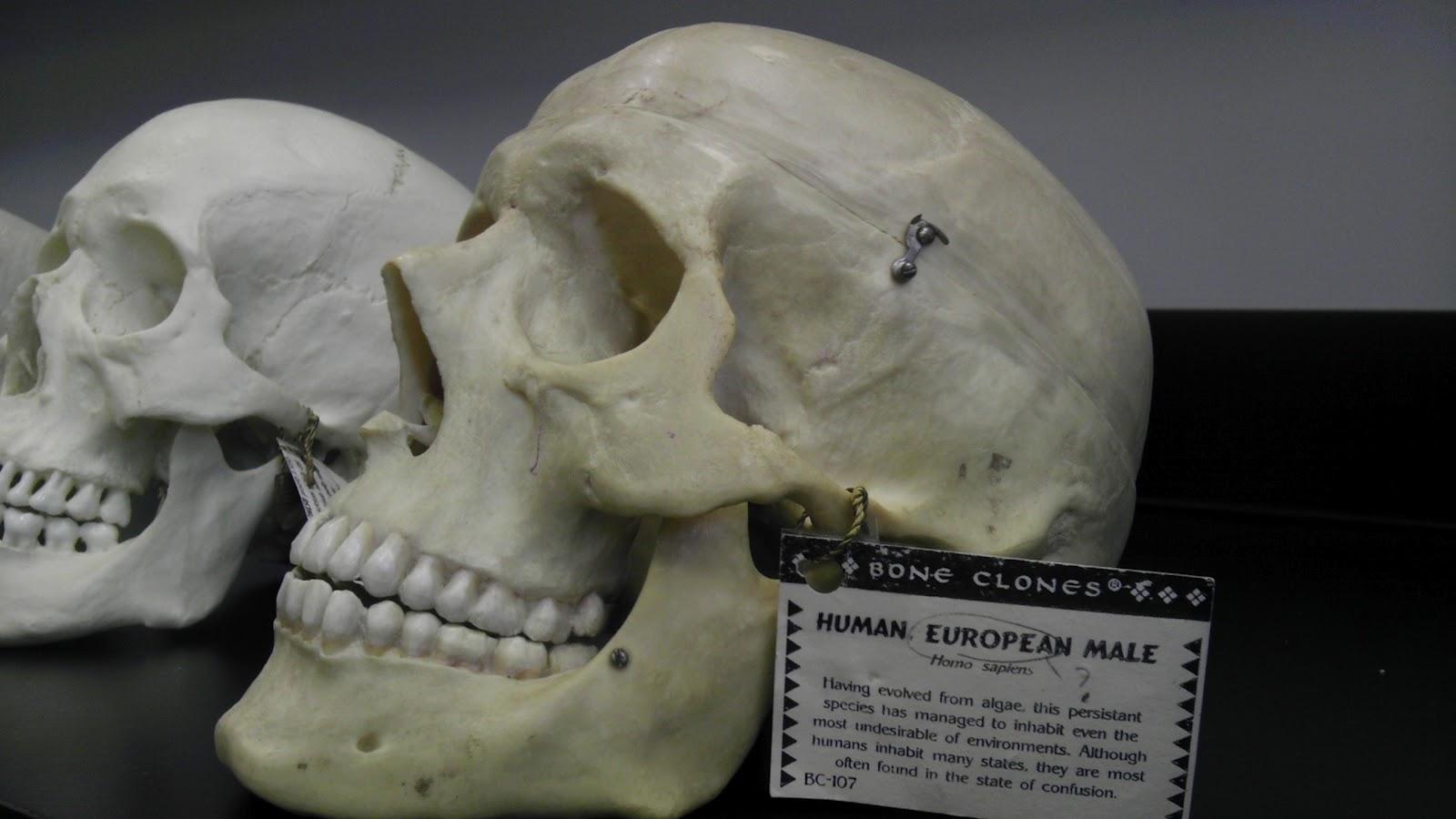 Physical Anthropology 101 Lesson 9 The Genus Homo