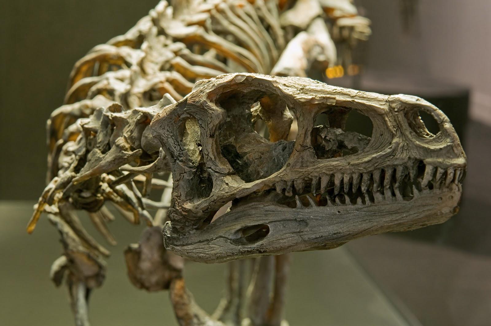 eoraptor dinosaur king - photo #34