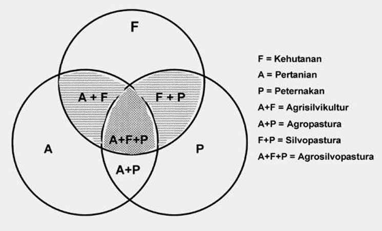 Macam- Macam Klasifikasi Agroforestri